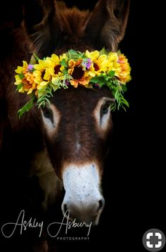 She is beautiful with her crown of flowers !