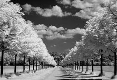 Perfect Country Setting Trees Long Driveway Farmhouse Black White Clouds Photo   eBay