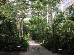 La serra tropicale