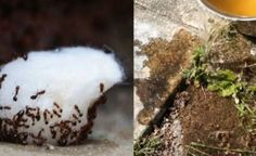 """Use These Easy Home Remedies And You'll Never See Ants Again. It might be tempting to stomp on these annoying critters the second you spot their ant trail, but there are better and more practical ways to send them a """"keep out"""" message. Ants Marching, Ants In House, Get Rid Of Ants, Cheap Trick, First Health, Insect Repellent, How To Get Warm, Backyard Landscaping, Home Remedies"""