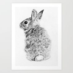 In the powder room, with those gray walls? Rabbit Art Print by Anna Shell - $14.56