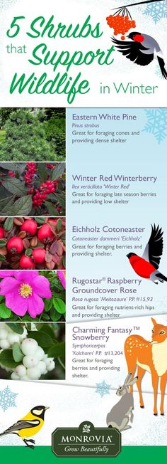 Migratory birds (and other critters) need a diet of heavy-duty food on a regular basis to thrive over the winter months. Here are just a few of the plants you can sink into your landscape right now to help keep them happy and healthy (and you get the excitement of watching them, too).