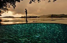 Muitos fotógrafos têm o dom de tirar boas fotos em terra, outros possuem mais talento para tirar boas fotos subaquáticas.