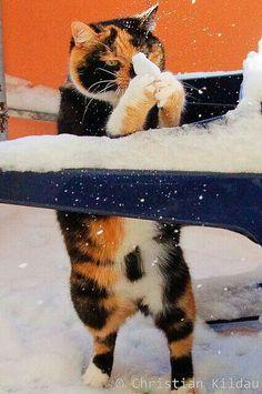 Falling Snow Live Wallpaper For Iphone Neon Animals View Bigger Neon Kitten Live Wallpaper