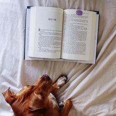 Dog Finnikin reading Truthwitch book via PerpetualPageTurner on Instagram