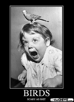 My friend doesn't like birds and this made me laugh like crazy! So hilarious!
