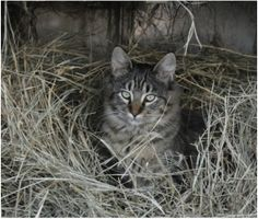 Farm cat in the hay bed