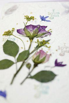 Dried & Pressed Flowers..