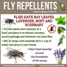 Natural Fly Repellent...not mentioned are tansies and sweet woodruff