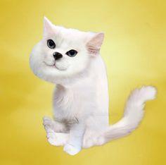 Photoshop, Cats, Animals, Gatos, Animais, Animales, Animaux, Animal, Kitty