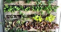 6 Auspicious Tips: Backyard Garden Pond Plants backyard garden oasis fire pits. Diy Herb Garden, Herb Garden Design, Garden Oasis, Backyard Garden Design, Backyard Farming, Vegetable Garden, Garden Ideas, Garden Path, Potager Garden