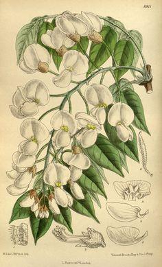 n92_w1150 | Curtis's botanical magazine.. London ; New York … | Flickr