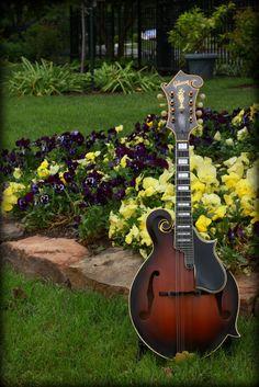 F-Style Mandolin w/Flowers #Mandolin #Mandola #Mandocello