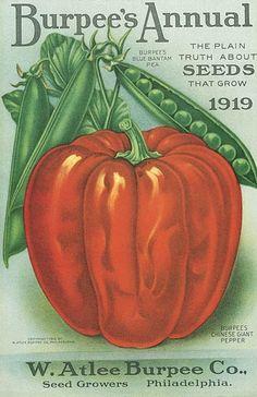 Seed Art | 1919 Burpee's Annual