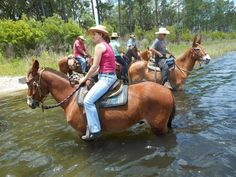 Very cute QH trail mule