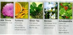5 Amazing Powerful Herbs! Put together in 1  creating the Synegizer! Certain foods, especially fruits and vegetables, contain antioxidants. But Protandim will boost your body's production of antioxidants more effectively by activating the protein Nrf2, telling cells to turn on a network of antioxidant enzymes and protective genes.