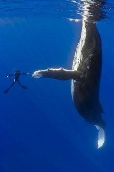 Whale high five!
