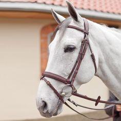 B VertigoLENNART Show Bridle | Horse Tack & Riding Apparel