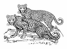 invasive species coloring pages - photo#47