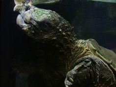 「turtle」の画像検索結果