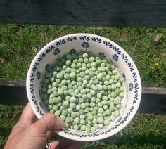 """Frozen peas for """"hot"""" chix :) We keep a small bucket in the freezer and add leftover veggies and stuff they will like, add a little water to cover and when its full we take it to the coop for the girls"""