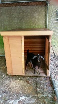 Our goat shelter