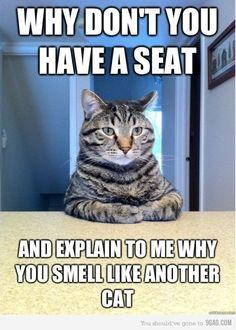 Hahaha silly kitty