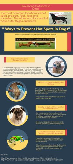 Some tips to prevent your dogs from hot spots .