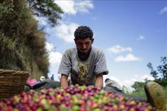 IICA firma programa para combatir la roya del café