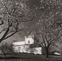Ai mê rico Algarve!: Artur Pastor - amendoeiras em flor