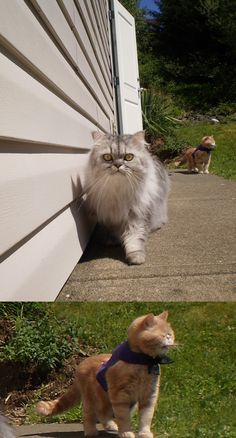 """I tried to take a photo of my cat's very first time outside, instead I got my other cat... well I don't know what he's doing. I'm dying"""