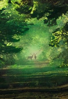 Deer in the park [location and photographer unknown]