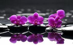 спа, камни, Spa, фиолетовые, цветы, капельки, purple flowers