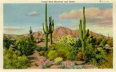 Postcards from Maricopa County Arizona
