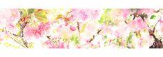 #SAKURA 1 #watercolor_flowers #OHGUSHI #水彩 #particles_粒子 #桜