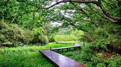 小網代の谷が「奇跡の自然」と呼ばれる理由 | 今週のHONZ | 東洋経済オンライン | 経済ニュースの新基準