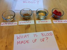Making a Model of Blood to coincide with Concepts and Challenges bk. 2 Biology 15 lesson