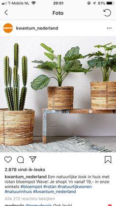 Potted Plants, Indoor Plants, Rattan Planters, Tree Shop, House Plants Decor, Basket Decoration, Landscaping Plants, Cool Diy, Classroom Decor