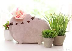 Wishing You a Wonderful Spring Day. From Pusheen to you :)