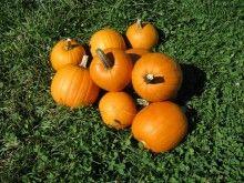 Pumpkin from flavor of love nude