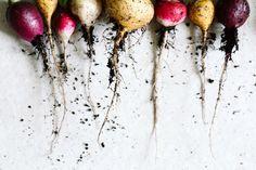 Gebackene Kartoffeln mit bunten Radieschen | KRAUTKOPF