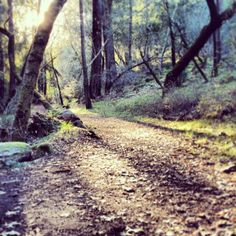 Top 8 Activities for Spring Campers: The Ritchey Canyon Trail in Bothe Napa Valley State Park.