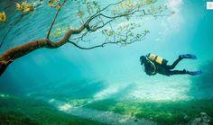Deze foto van 'het groen meer' (Grüner See) werd genomen in Tragöss, Oostenrijk, en kreeg de derde plaats. Tijdens de lente steeg de waterspiegel met tien meter waardoor de wandelpaden onder water kwamen te staan. Na een paar weken zakte het water. © Marc Henauer / National Geographic Traveler Photo Contest