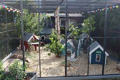 Chicken Coop - Best dog collar here Inside those outdoor homes these rabbits have every need catered for, plenty of… visit us Building a chicken coop does not have to be tricky nor does it have to set you back a ton of scratch. Bunny Cages, Cat Cages, Rabbit Cages, Diy Bunny Cage, Cute Chicken Coops, Backyard Chicken Coops, Chickens Backyard, Backyard Ideas, Garden Ideas