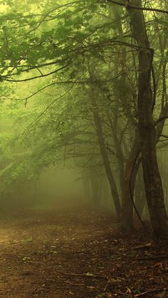 Poster of Green forest with fog, Nature Posters, Fantasy Forest, Dark Forest, Misty Forest, Forest Path, Best Wallpapers Android, Wallpapers Ipad, Live Backgrounds, Natures Path, Beautiful Places