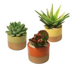 BATHROOMS AND AROUND HOUSE  21.56 each 3.5 inch w and 3.5 inch d and 5 inches h horizon succulent plant assorted 3pack