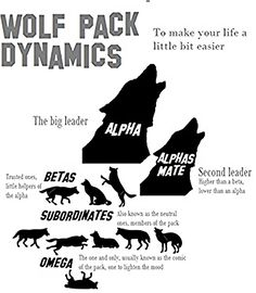 wolf pack dynamics