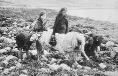 Tour Scotland Photographs: Old Photograph Children Collecting Whelks Aultbea Scotland