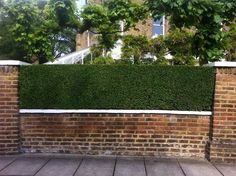 Image result for garden brick wall and privet hedge