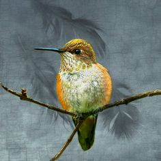 Luminous Hummingbird Resting on a Branch with by junehunter, $7.00